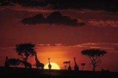 kenya_7nt_palm_tree