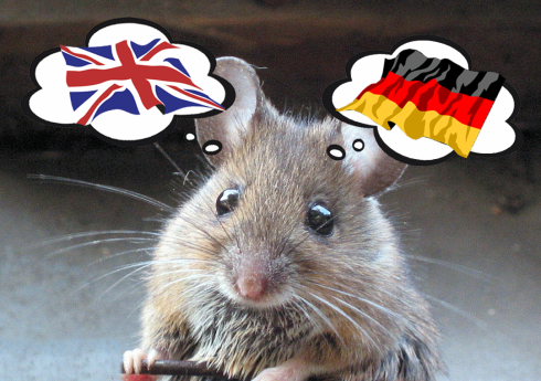international mouse